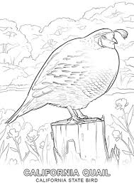 Click To See Printable Version Of California State Bird Coloring Page