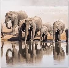 dekoglas glasbild elefanten familie acrylglas bild küche