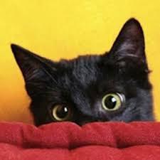kitty cat talking kitty cat talkingkitty101