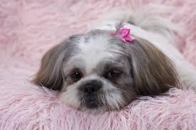 airport animal hospital airport veterinary center poughkeepsie wappingers falls vet