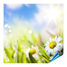 fliesenaufkleber für bad und küche 10x10 cm motiv frühlingsblumen 20 fliesensticker für wandfliesen
