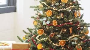 Christmas Tree Shop Danbury Ct by Christmas Tree Shop Credit Card Mahbubrn Me