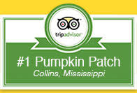 Pumpkin Patch Cleveland Mississippi by Pumpkin Patch Wagon Rides Family Fun And Tours At