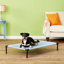 Kh Cool Bed Iii by Starmark Dog Zone Pro Training Dog Bed Sky Blue Large Chewy Com