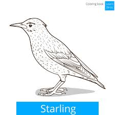 Starling Learn Birds Coloring Book Vector