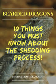 10 things you must know about the bearded dragon shedding process