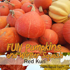 Varieties Of Pumpkins by 11 Fun Pumpkins And Winter Squash And How To Use Them Home Grown Fun