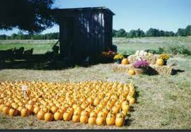 Griffin Farms Pumpkin Patch by 10 Great Pumpkin Patches In Alabama