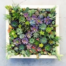 Vertical Succulent Wall Art Made To Order By TiffanysLivingArt This Would Be Perfect For The Back Of My House