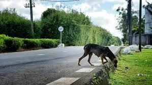répulsifs naturels contre les chiens économie solidaire