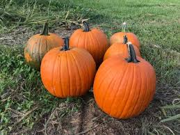 Columbus Ohio Pumpkin Patches by 10 Best Pumpkin Patches In Columbus In 2017