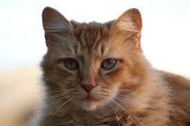 orange cat names 40 orange cat names care community