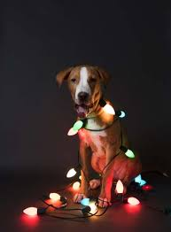 Are Christmas Trees Poisonous To Dogs Uk by 20 Most Dangerous Christmas Decorations For Dogs