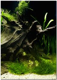 Aquascape Of The Month November 2009: