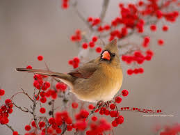 Funny Image Collection: Bird Wallpapers National Geographic! National Geographic Backyard Guide To The Birds Of North America Field Manakins Photo Gallery Pictures More From Insects And Spiders Twoinone Bird Feeder Store Birds Society Michigan Mel Baughman Blue Jay Picture Desktop Wallpaper Free Wallpapers Pocket The Backyard Naturalist 2017 Cave Wall Calendar