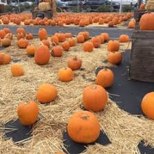 Pumpkin Patches Near Bakersfield Ca by Peppertree Pumpkin Patch Pumpkin Patches Union Ave U0026 Camden