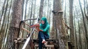 Rute Menuju Wisata Hutan Pinus Dlingo Memang Sangat Mudah Kami Berangkat Dari Kota Jogja