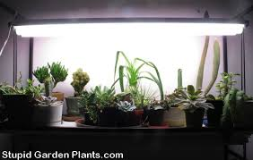Winter Grow Lights Plants in the house