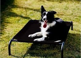 Coolaroo Dog Bed Large by Coolaroo Dog Beds Korrectkritterscom