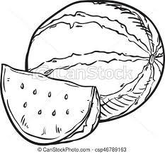 Hand Drawn Sketch Watermelon Illustration