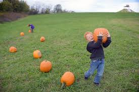 Pumpkin Patch El Paso by Pershing Students Pick Pumpkin At Hunts Patch Local News
