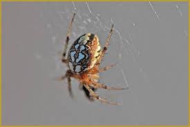 photos de pouponnière et toile d araignée araignées insectes nature