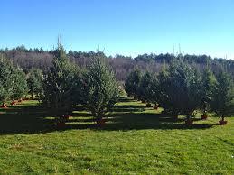Christmas Tree Shops York Pa Hours by Christmas Tree Farm Greenwood Tree Farm