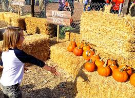 Pumpkin Patch College Station 2014 by Family Fun At The Cal Poly Pomona Pumpkin Patch Popsicle Blog