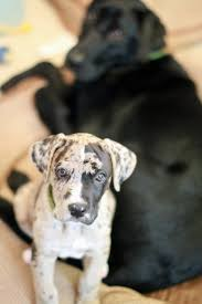 Best 25+ Great Dane Mix Ideas On Pinterest | Great Mastiff ... Cloud Nine Dog Traing Best Houses In 2017 For Both Indoor And Outdoor Use Siberian Husky Costs Facts Infographic Ultimate Guide Farmer Tag Wallpapers Country Children Tractor Fields Farm Dogs Plastic Dog Barnhome Kennel Petshop Online 25 Food Bowls Ideas On Pinterest Project Food Cindee X Stackhouse Owyheestar Weimaraners News 614 Best Australian Cattle Images Blue Heelers 5 Facts About Dogs Deworming The Horse Owners Resource Lonely Escapes Yard To Get A Hug From His Friend Youtube Oakwood Park Morton6711