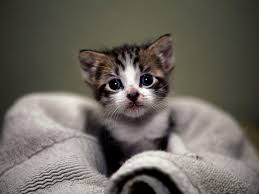 kitty cat kitty cat wallpapers wallpaper cave