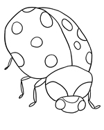 Lady Coloring Picture Ladybug Pages