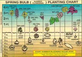 plant bulbs for early color san luis obispo greener