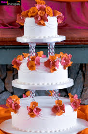 Cake Lady Jane Think