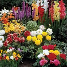 summer flowering bulbs flower power fundraising
