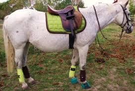 couleur tapis de selle 1 forum cheval