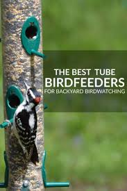 Best Feeders For Backyard Birdwatching: Review Of Tube Feeders Some Ways To Keep Our Backyard Birds Healthy Birds In The These Upcycled Diy Bird Feeders Are Perfect Addition Your Two American Goldfinches Perch On A Bird Feeder Eating Top 10 Backyard Feeding Mistakes Feeder Young Blue Jay First Time Youtube With Stock Photo Image 15090788 Birdfeeding 101 Lover 6 Tips For Heritage Farm Gardenlong Food Haing From A Tree Gallery13 At Chickadee Gardens Visitors North Andover Ma
