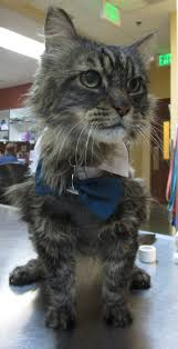 High Plains Veterinarian Colorado Springs   Colorado Springs Vet ... Photos From Tuesdays Practice Colorado Springs Sky Sox Official The Collective Set For March Opening Food News Lease Retail Space In Barnes Marketplace On 445994 Rd View Weekly Ads And Store Specials At Your Baptist Church Get A Job Monday Soar Career Into Wild Blue Car Wash Video Apts Townhomes Stetson Meadows Ppt Cdot Funding Powers Boulevard State Hwy 21 Werpoint Cstution Co Planet Fitness Top 25 Accidentprone Intersections Security Service Federal Credit Union Branch Home Koaacom Continuous Pueblo