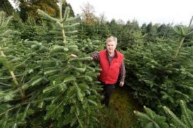Jeff Gilbert Owner Of Woods Farm Christmas Trees In Shirley Where 40ft