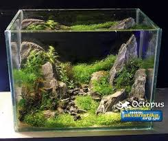 16 best images about shrimp tank on diffusers trees
