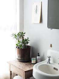 Small Plants For The Bathroom by 9 Chic Plants For Your Home That Will Bring A Fresh Vibe Into Any