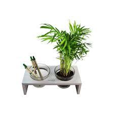 plante de bureau plante dans pots en verre et plateau de bureau personnalisé