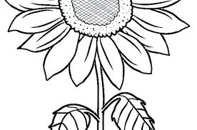 Sunflower Coloring Pages Perfect Sunny The Page Print