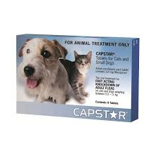 flea treatment for cats capstar small cat flea treatment petbarn