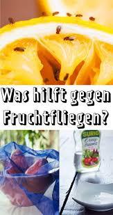 was hilft gegen fruchtfliegen lecker was hilft gegen