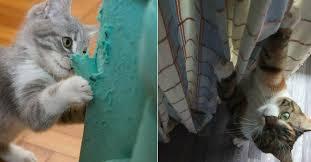 comment eviter les griffes de sur canape 10 astuces répulsives naturelles pour les chats qui griffent