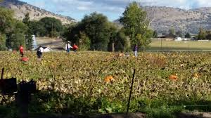 Pumpkin Patch Medford Oregon by Falls Days Are Busy In Klamath Falls What Will You Do