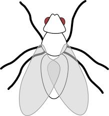 Fly Clip Art at Clker vector clip art online royalty free