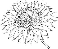 Pin Drawn Sunflower Coloring Book 3