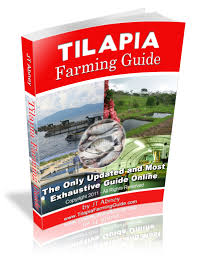 Raising Tilapia Fish - All The Best Fish In 2017 Backyard Tilapia Fish Farm August 192011 Update Youtube Fish Farming How To Make It Profitable For Small Families Checking Size Backyard Catfish To Start A Homestead Or Commercial Tilapia In Earthen Pond 2017 Part 1 Preparation And Views Of Wai Opae Tide Pools From Every Roo Vrbo Sustainable Dig Raise Bangkhookers Fishing Thailand An Affordable Arapaima In Your Home Worldwide Aquaponics Garden Table Rmbdesign Guide Building A Growing Farm Sale Farming Pinterest