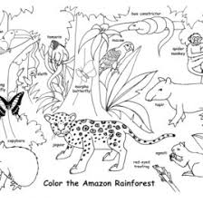 Amazon Rainforest Coloring Pages CartoonRocks